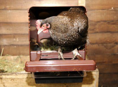 Chick Box - munintapesä sisätiloihin